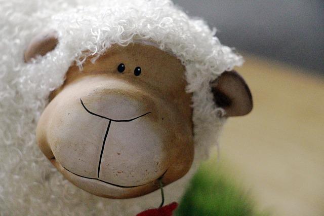 sheep-320899_640