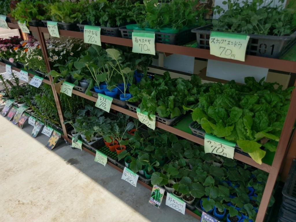 たつのこ産直市場 店頭 野菜の苗