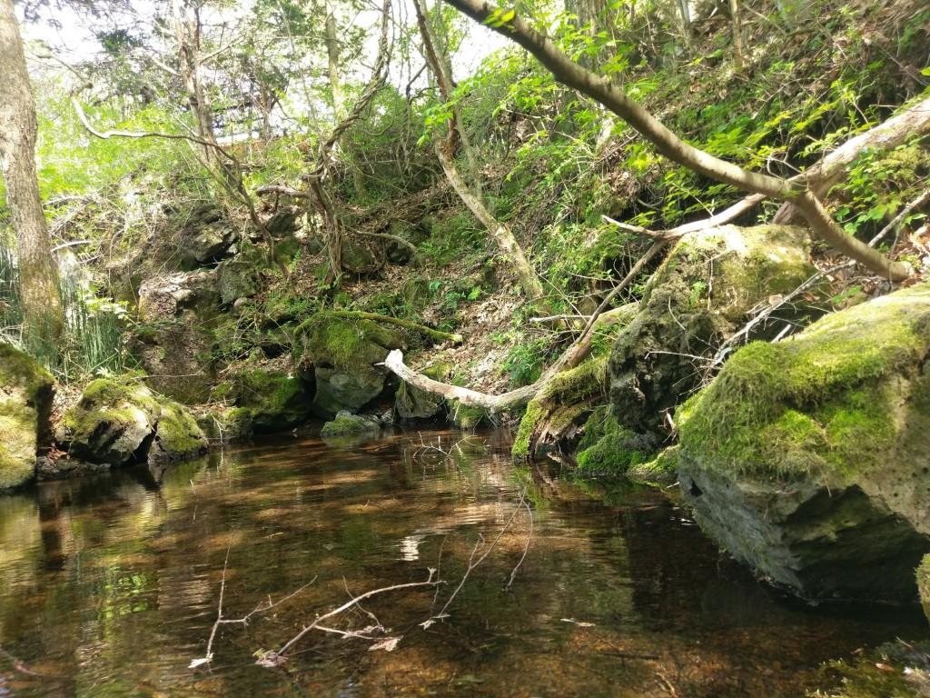 忍野八海 出口池 景色