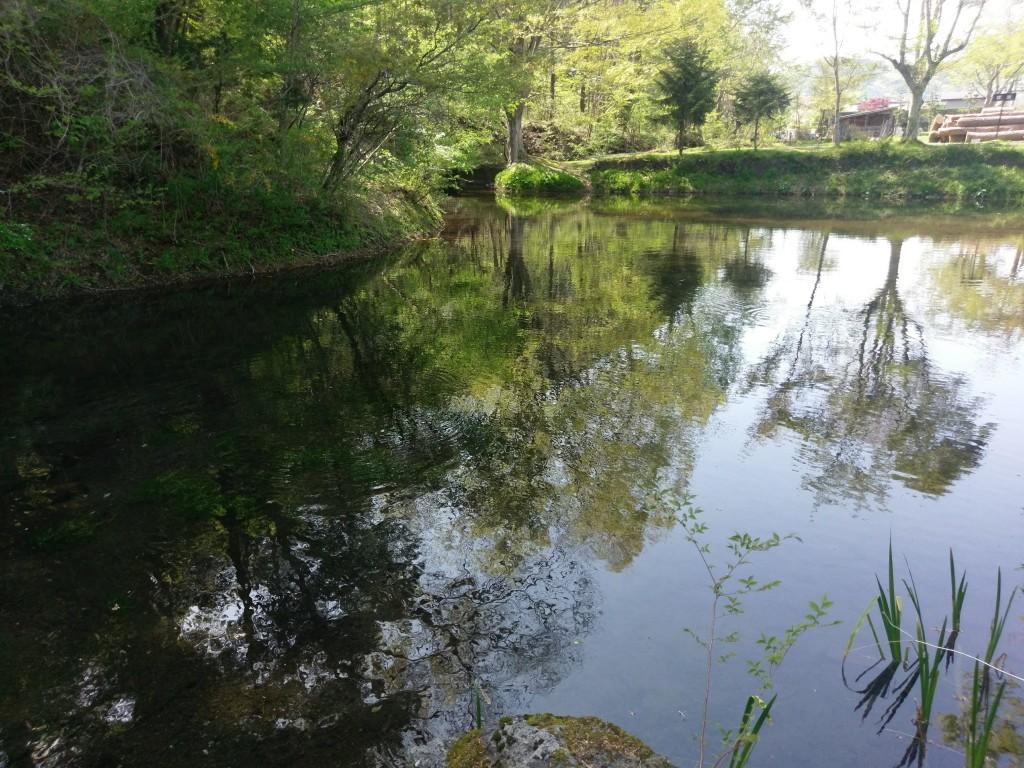 忍野八海 出口池