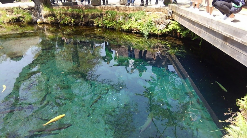湧池 水面